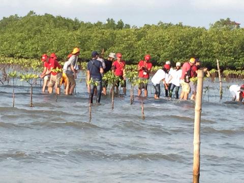 Mangrove planting.